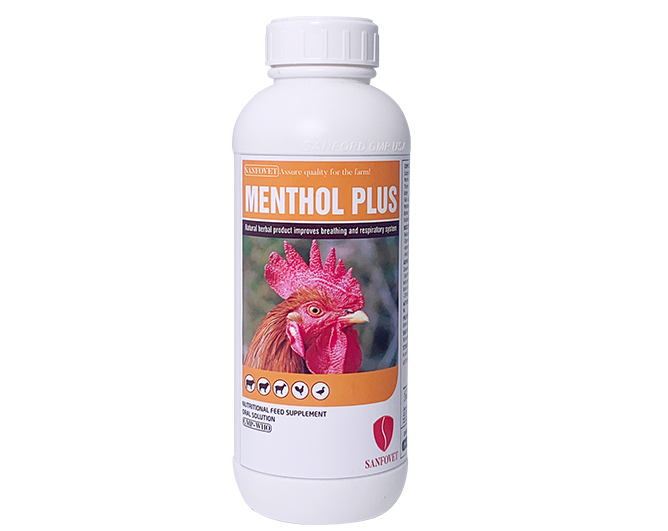 Menthol plus (Pakistan)